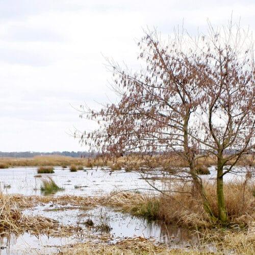 'Watercorridor laat de natuur voor je werken'